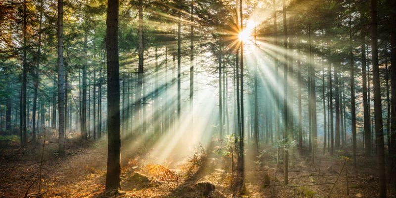 lightinforest